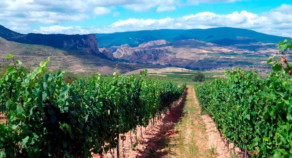 Bodega-Palacios-Vinos-de-Finca-Maturana-blanca-Nivarius-Rioja-01