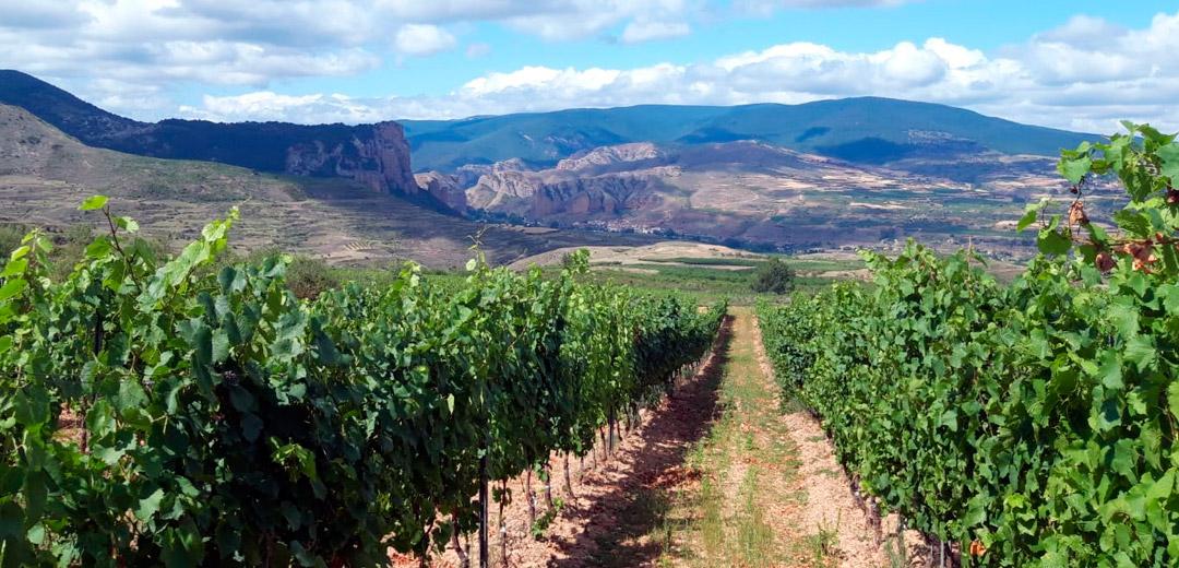 Bodega-Palacios-Vinos-de-Finca-Maturana-blanca-Nivarius-Rioja